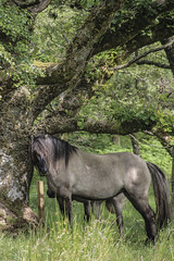 Horse Tree (Kobi W.) Tags: ocean park street new old city uk trip travel family flowers autumn trees winter light sunset red sea summer vacation portrait england sky people urban bw food sun white lake holiday snow chicago black paris france color berlin green london art fall love beach nature water car birds animals bike yellow rock architecture kids night clouds canon river garden landscape fun photography scotland photo spring europe day photos live blackandwhiteblue