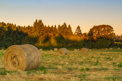 Hay in morning light (Scott DeSelle) Tags: oregon canon hay agriculture acratech reallyrightstuff rrs washingtoncounty canonef24105mmf4lisusm eos7d