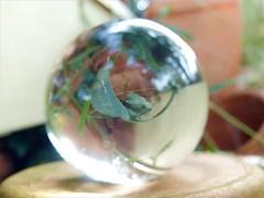 flower pots refraction (april-mo) Tags: sphere round refraction kugel crystalball spheric experimentalphoto nonopticalglass