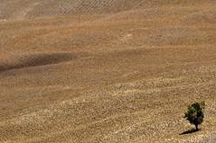 Solo soletto (luporosso) Tags: natura nature naturaleza naturalmente nikond300s nikon minimal minimalismo minimalism terra heart alberi tree landscape landscapes