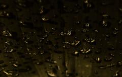 Drops (Selqet) Tags: macro nature rain leaf drops nikon natura september coolpix foglia pioggia manipulatedphoto gocce p100 2013 selqet