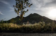 Sprinkler (janwellmann) Tags: sunset mountain tree water drops sprinkler freezeframe roadside waterdrops bushes dispersed waterflying