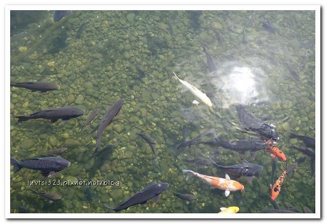 일산호수공원08