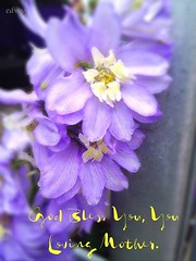 309 For All That Are There, Physically, Spiritually, As Step In, Replacement, Sole Provider, Giver of  Your Time, Part of the Village;  For a Child to an Adult! Thank You For Being A Loving Mother. -EDWW (EDWW day_dae (esteemedhelga)) Tags: life flowers plants love beach me nature beauty loving garden blessings creativity hope living walks alone remember peace hand risk friendship time god you faith joy lakes parks belief celebration intelligence thoughts together gift quotes soul future dreams passion knowledge laughter worry strength positive care tomorrow happyholidays yesterday ponds teach sayings herb learn struggle fellowship gentle courage nightmares nurseries encouragement helpconfidence