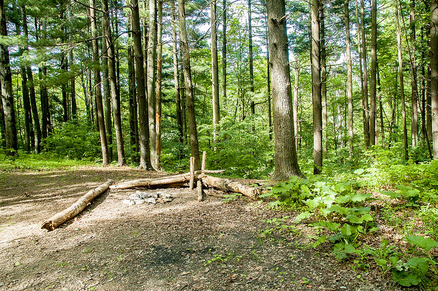 Hoosier National Forest - Charles Deam Wilderness Area - May 22, 1015