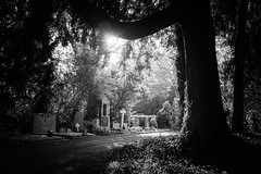 The light we go into (gambajo) Tags: trees light sunset blackandwhite sun sunlight cemetery sunshine blackwhite headstone tombstone headstones sunny gravestone tombstones gravestones