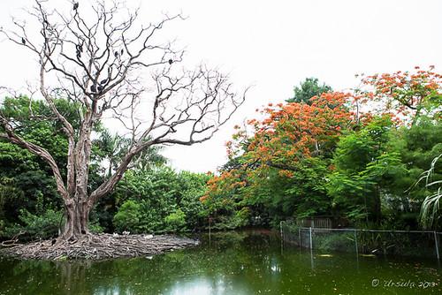 Pond 1387