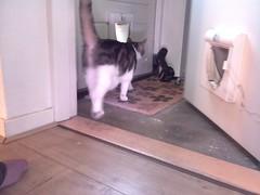 20161016-171820-i-1 (Catflap central) Tags: cat catdoor katzenklappe raspberry pi camera cats catflap kattenluik catflapj2nnl pet meow