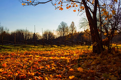 Autumn light (Joni Mansikka) Tags: autumn nature outdoor landscape trees leaves branches colours light fence sky askala paimio suomi finland canonef2890mmf456