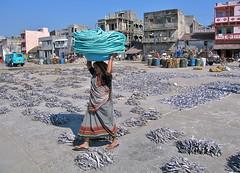 Probanda (Gujarat) (vittorio vida) Tags: india gujarat porbandar street portrait people travel asia woman rope blue fish port harbor
