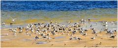Northshore Park - St Petersburg, FloridaSC_9811 (lagergrenjan) Tags: northshore park st petersburg florida tampa bay birds