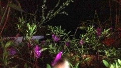 2016-09-27 21.31.47_tonemapped (74prof) Tags: hdr flowers night facetime