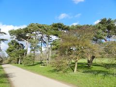 Trees, Oxford University Park, Oxford, Feb 2016 (allanmaciver) Tags: oxford university park trees walk enjoy fresh air green space city allanmaciver england