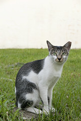 161010 - Smart (y_leong23) Tags: cat dlux singapore
