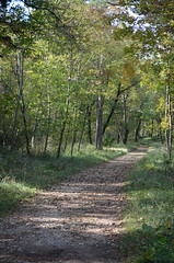 Roman Road In The Woods [Sgonico - 29 October 2016] (Doc. Ing.) Tags: 2016 trieste veneziagiulia friuliveneziagiulia fvg nordest italy carso sgonico prosecco ts fall autumn woods