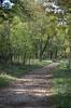 Roman Road In The Woods [Sgonico - 29 October 2016] (Doc. Ing.) Tags: 2016 trieste veneziagiulia friuliveneziagiulia fvg nordest italy carso sgonico prosecco ts fall autumn woods