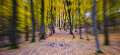 Zoomed Exposure (Forest) (vladvizante) Tags: outdoor forest wood zoom movement action speed effect art exposure trees fall nature autumn hike explore walk romania yellow brown d3300 nikon
