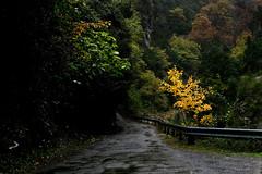 Sobrarbe en otoo. Carreteras del Sobrarbe (carnuzo) Tags: leica m9 elmarit 135mm