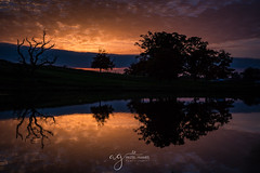simply Beautiful sunset (Pastel Frames Photography) Tags: cartonhouse kildareireland sunset reflections trees lake water silouette sky clouds colours canon5dmark3 canon2470mm maynooth carton demesne