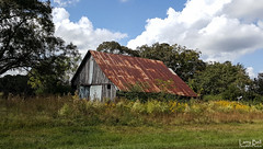 20161016_135314 (SouthernPhotos@outlook.com) Tags: larrybell larebell larebel southernphotosoutlookcom barn phillipsville baldwincounty alabama tinroof