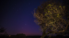 night (nano_el) Tags: night noche tree arbol led lowlight star estrellas nikon d750 20mm 18 nikkor