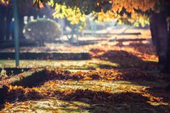 _YEZ8191-Editar.jpg (Yezrael Pérez) Tags: sun flare naturelovers hojas nature colores city sol leonesp otoño hazdeluz