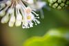 Nature is beautiful (Zeeyolq Photography) Tags: canon100mm28lisusm ecology environment environnement fleurs flowers green nature plantes plants milizac bretagne france