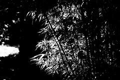 black & white - 3 (alice.decoorebyter) Tags: naturalworld naturephotograph naturepics nature beautiful beauty beautyinnature