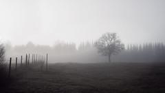 Tree in the fog (ppaschka) Tags: tree baum feld landschaft landscape nebel fog