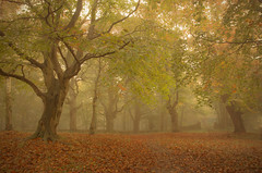 Deep in the Woods (Glenn D Reay) Tags: trees mist atmosphere atmospheric wood autumn splittones early morning pentaxart pentax k30 sigma1770hsm glennreay
