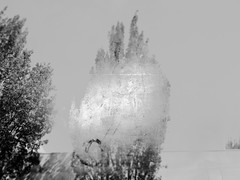 Silver (Rossdxvx) Tags: textured texture textures trees tree abstract art surreal surrealism silhouette overlay overexposed outdoors 2016 lofi