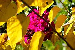 Colors (g_athens [swaping]) Tags: colors flowers yellow greece ελλάδα χρώμματα κίτρινα φύλλα λουλούδια
