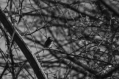 On Your Own (TNMYcFan182) Tags: outdoor birds animals animal nature blackandwhite monochrome bw contrast shadows sky nikon nikond7000 nikkor nikkorlens