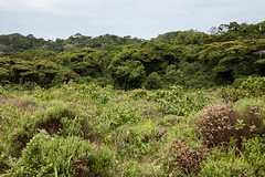 Sudafrica (andreadegi) Tags: stluciapark kwazulunatal sudafrica za