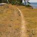 20150704_03 Trail through dry grass between road & ocean | Ekstakusten, Gotland, Sweden