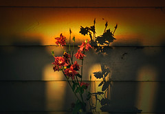 Shadows of Reality (Kevin_Jeffries) Tags: art flower shadows wall light new nikon d7100 nikkor jeffries color reality 1685mm texture arches shade