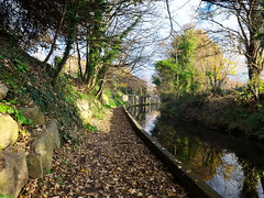 Banks of the Dodder (turgidson) Tags: panasonic lumix dmc g7 panasoniclumixdmcg7 panasonicg7 micro four thirds microfourthirds m43 g lumixg mirrorless olympus m zuiko digital ed 12mm f20 f2 olympusmzuikodigitaled12mmf20 prime lens primelens wide angle wideangle silkypix developer studio pro 7 silkypixdeveloperstudiopro7 raw clonskeagh dublin ireland p1080231 river dodder milltown valley linear park walk autumn autumnal leaves