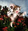 Yavru Kedilerin Sevimli Pozları (mustafa88_06) Tags: fotoğrafçılık kedi yavrukedi yavrukedilerindeğişikpozları