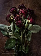 Dead roses (HoustonHVAC170) Tags: flowers color nature flower love art 500px wood rose flora bouquet composition romance decoration painting fineart naturemorte my1stpicon500px