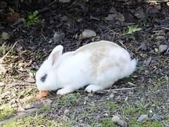 roger rabit (alfonsovalgar) Tags: conejo rabit zanahoria parque la paloma fujifilm x30
