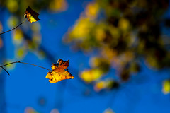 The Last Few Fall Pics (Michael Bateman) Tags: kinnelon newjersey unitedstates us michael bateman photography michaelbateman