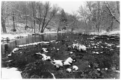 Snowy River, 2016.11.20 (Aaron Glenn Campbell) Tags: nikcollection silverefexpro outdoors nature lehighriver thornhurst nepa pennsylvania lackawannacounty bw blackandwhite sony a6000 ilce6000 mirrorless rokinon 12mmf2ncs wideangle primelens manualfocus emount snowfall snow reflections