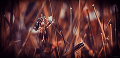 Respite (limebluphotography) Tags: flight fly sting bee wasp flower food summer spring fall hive colony wings buzz pest sky flowers pollen grass weather travel insect macro photography nature landscape picnic popular trending