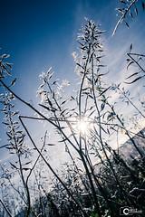 Frost (CHRiiZ) Tags: rot winter nikon d5300 frost frosty cold blue nature natur natureporn landscape landschaft sunny sun sunset sunshine sunrays sunray cloud cloudporn