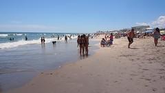 P9040202 (photos-by-sherm) Tags: carolina beach nc north atlantic ocean boardwalk downtown swimmers walkers sunbathers summer