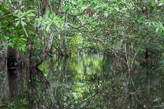 FORESTA ALLAGATA   ---  FLOODED FOREST (cune1) Tags: natura nature fiume river foresta forest africa cameroon nyongriver ebogoforst luci lights riflessi reflections