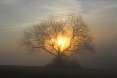 IMG_1013 (pappleany) Tags: pappleany outdoor landschaft landscape nebel fog baum tree sonnenaufgang sunrise bayern bavaria esche