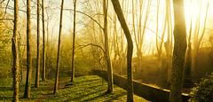 a trenc dalba (Jordi Molas) Tags: trees sunset sol rio alberi backlight sunrise river contraluz nikon tramonto arboles alba fiume panoramic girona amanecer bananas panoramica banane controluce platanos panoramiche d90