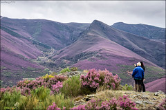 paisaxe violeta