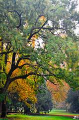 Diramazioni (Riccardo Brig Casarico) Tags: autumn italy green colors alberi wow photography nikon europa europe italia colours foto dettagli fotografia nikkor autunno colori brig 18105 riki camminare d5100 brigrc